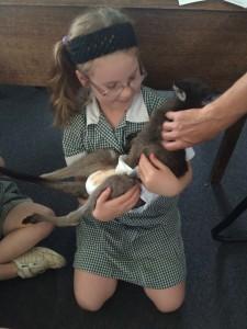 Kangaroo visit