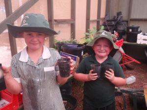 Planting Wattle seeds